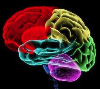 Cerveau & gouvernances